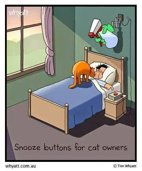 snooze button for cats